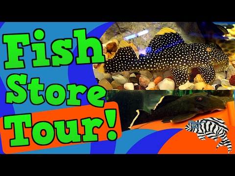Epic Fish Store Tour! Top Shelf Aquatics