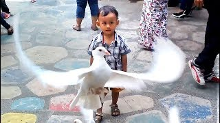 Anak Lucu Bermain Dengan Burung Di Taman | Mainan Anak Laki Laki