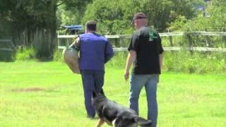 Schutzhund 3 Protection Score 96 Vongalanberg Kai And Travis Foster.flv