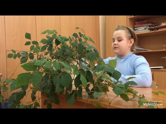 Изображение предпросмотра прочтения – ПолинаНиколаенко читает произведение «Молодую рощу шумную» М.И.Цветаевой