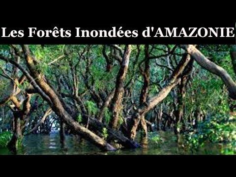 Documentaire : Les Forets Inondées de l'Amazonie