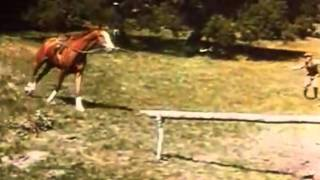 Video Best Horse Movies: Top 5 Tuesday download MP3, 3GP, MP4, WEBM, AVI, FLV September 2018