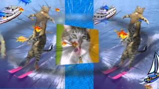 Наши любимые кошачьи (ролики ко дню рождения на этом примере)