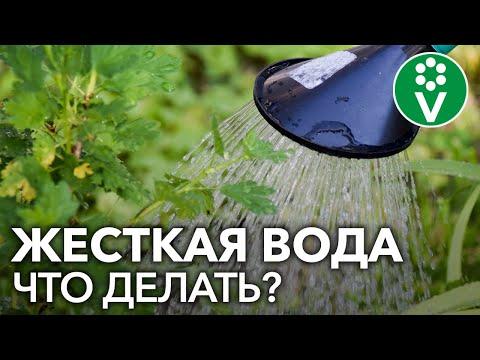КАК УЛУЧШИТЬ ВОДУ ДЛЯ ПОЛИВА растений? Бонус в конце!