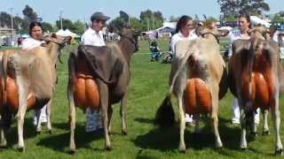 Dairy Cows in Australia Competition