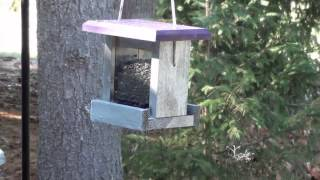 Birds At The New Feeders