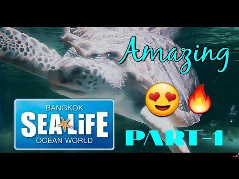 life-underwater-😍- -the-amazing-sealife-bangkok-ocean-world-🔥- -part-1-of-2