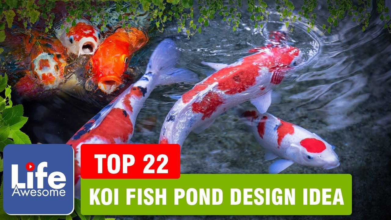 Top koi fish pond design idea 2017 the better ideas for Popular pond fish
