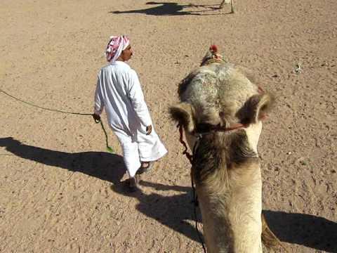 EGYPT - Sinai Peninsula - Camel Trip