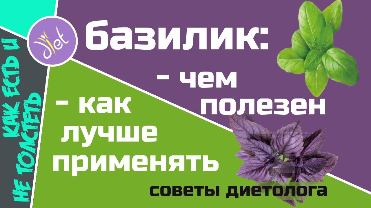 Базилик фиолетовый и зеленый - состав и разумное применение