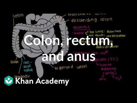 Colon, Rectum, Anus