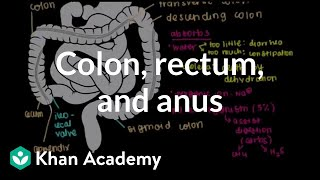 Colon, rectum, and anus | Gastrointestinal system physiology | NCLEX-RN | Khan Academy