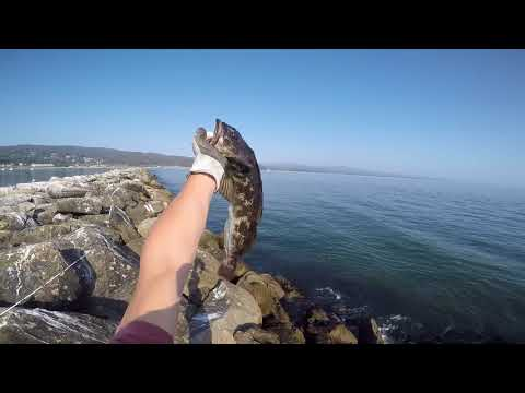Fishing Half Moon Bay Jetty: Lincod, Eel, Rockfish