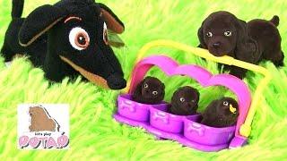 СЕМЬЯ С ЩЕНЯТАМИ! Щенок в Моём Кармане. Видео для Детей. Puppy in My Pocket Игрушки для девочек