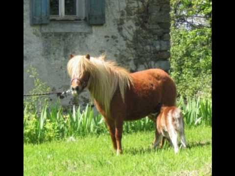 petit poney dieudonn mp3
