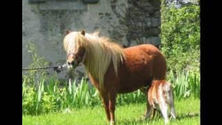 Petit Poney - Dieudonné
