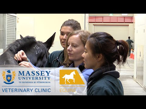 Equine Clinic I Behind the scenes at Massey Vet School