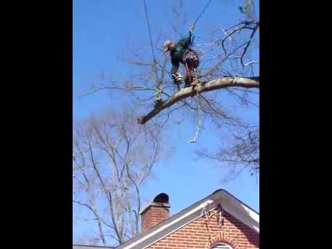 Cost of Tree Branch Removal  Estimate amp Service Prices
