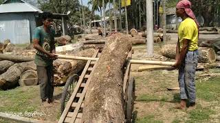 Whole Day With Unlimited Dangerous Wood Cutting।Wood Cutting Skilled Workers 2019।Wood Cutting Day
