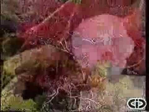 664 - Amazônia Viva - Novelas Ecológicas - Ecovídeo