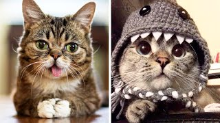 The Most Popular CATS Of INSTAGRAM