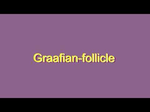 How to Pronounce Graafian-follicle