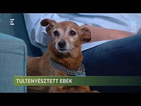 Túltenyésztett ebek - Zöld világ 2019-03-29 - ECHO TV