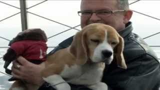 Westminster Dog Show Winner On Top Of The World At The Empire State Building