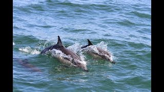 Море, лодка, дельфины.. В сети появилось интересное видео
