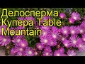 Делосперма купера Тейбл Маунтин. Краткий обзор, описание delosperma cooperi Table Mountain
