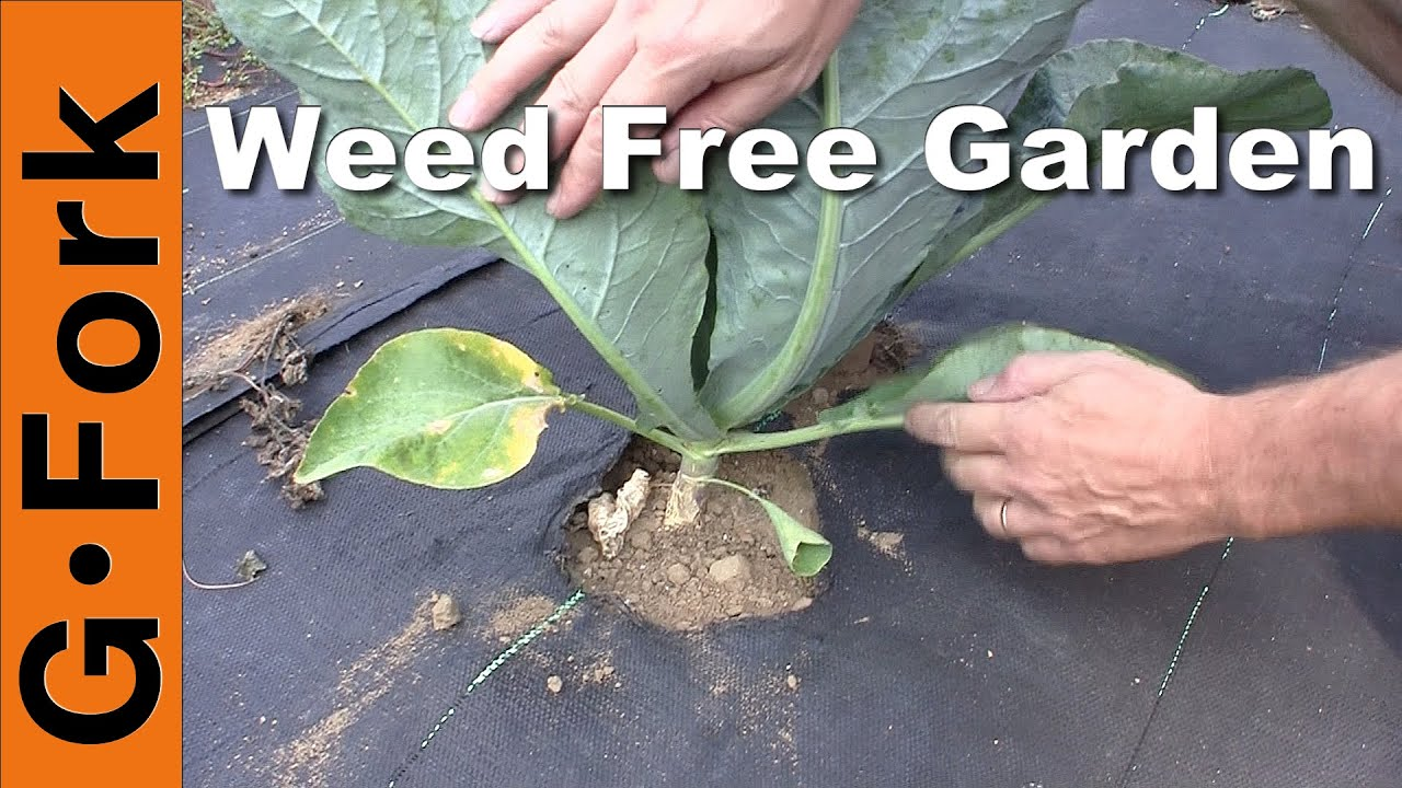 Natural Weed Control in the Vegetable Garden GardenFork YouTube