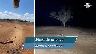 En redes sociales se viralizó el momento en que una plaga de ratones muertos caen del cielo en Australia, dejando una escena apocalíptica