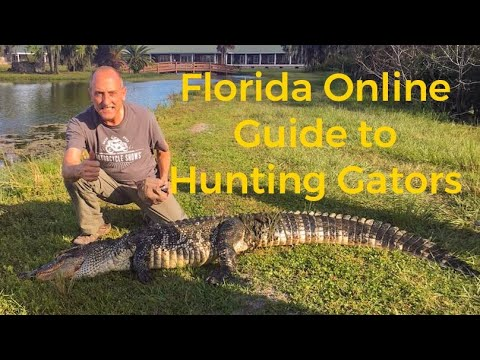 All About Alligator Hunting: Florida Guide To Hunting Alligators