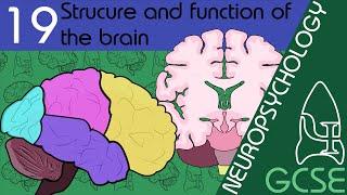 The Brain - Neuopsychology, GCSE Psychology [AQA]
