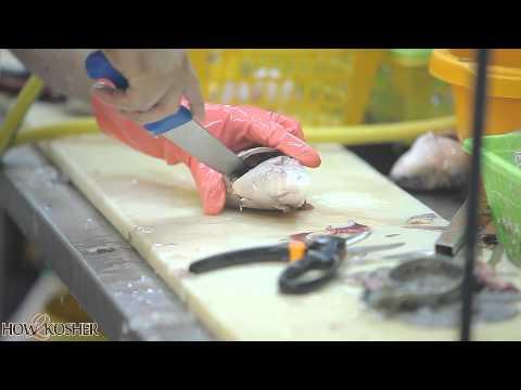 How To Clean A Kosher Fish Head For Rosh HaShanah [HD] איך לנקות ראש דג כשר לראש השנה