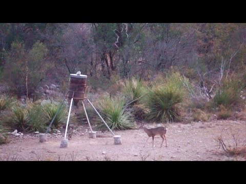 DEER DOWN In The Mountains Of West Texas!