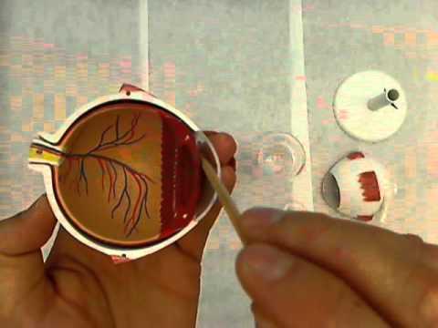 eye model.wmv