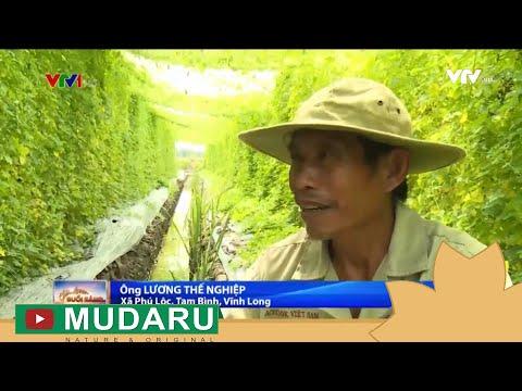 Kì lạ với lão nông vui vì làm thuê trên mảnh ruộng của mình | VTV1