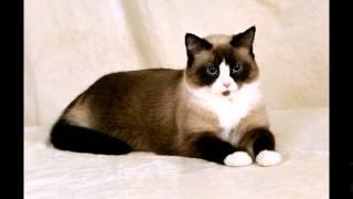 Акана корм для кошек цена