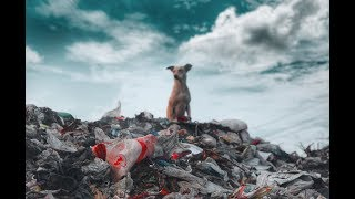 Focus on saving the world with one piece of litter