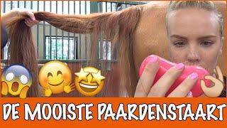 tips-van-het-internet-de-beste-paardenstaart-ever-paardenpraattv