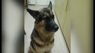 Незрячий челябинец разыскивает свою собаку-поводыря