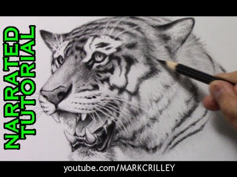 how-to-draw-a-tiger-[narrated-step-by-step-tutorial]