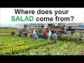 A Quick Trip to the Salad Bowl of the World