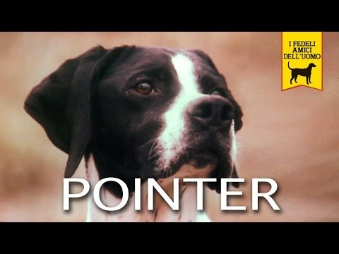POINTER trailer documentary
