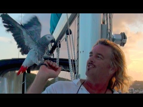Sailing the CARIBBEAN with a CRAZY PARROT!  Filmed in St Thomas, USVI, CARIBBEAN
