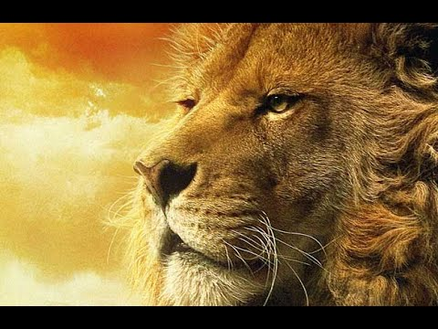 Lion Brotherhood  Amazing Documentary