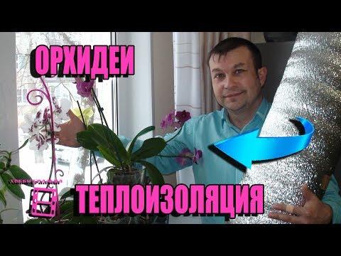 Вопрос: Как создать наиболее благоприятные условия для орхидеи в квартире зимой?