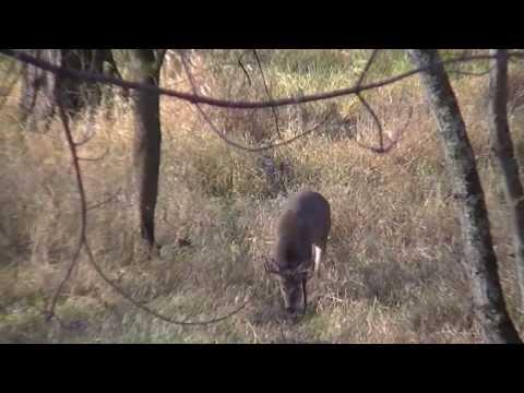 Bowhunting Self Filmed Public Land Wisconsin & Minnesota