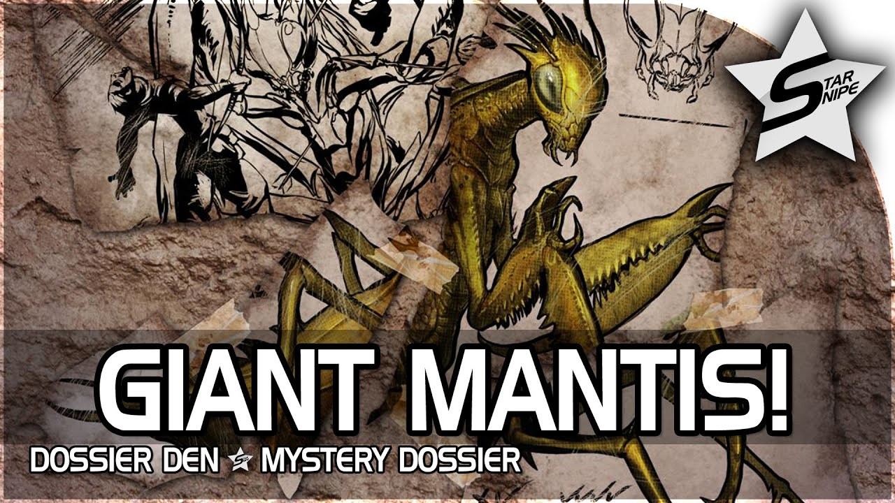 Praying mantis video domination